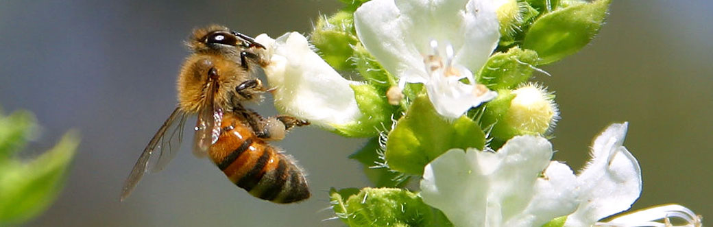 bees-pic